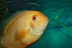 水族馆鱼 库存照片