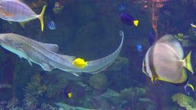 水族馆,鱼缸,珊瑚礁,动物,自然 股票视频