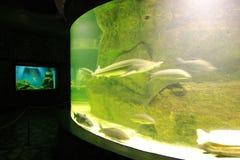 水族馆2 库存图片