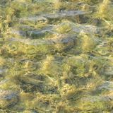 水无缝的纹理在铺磁砖的水池的 背景,自然 免版税库存图片