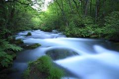 水春天在森林里 免版税库存照片
