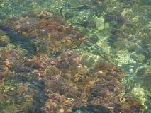 水晶海运表面 库存照片