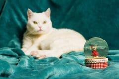 水晶雪球 说谎在毯子的猫在模糊的背景中 免版税库存图片