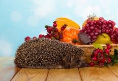水果和蔬菜篮子,附近对灰色多刺的猬,在桌上 库存照片
