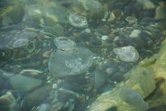 水母漂移 免版税库存照片