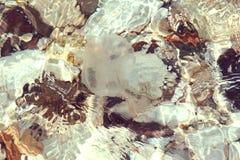 水母 免版税库存图片