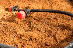 水水滴在树罐的旱田为准备wa 库存图片