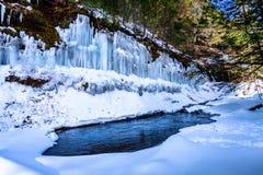水池在冻森林里 免版税库存照片
