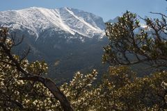 水池极大的国家公园峰顶轮车 免版税库存照片