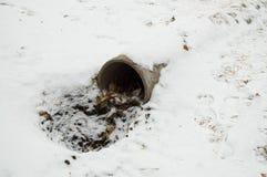 水泥下水道排水管、一个孔与叶子和土,报道用第一雪 免版税图库摄影