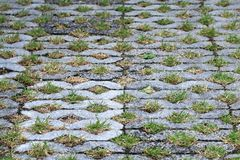 水泥地板、纹理装饰砖块在庭院走道,石步行和小卵石在日本公园,绿色青苔在地面 免版税库存图片