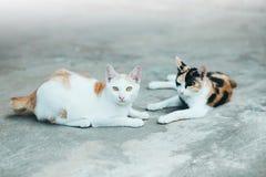 水泥猫皮肤表面上的两只猫睡眠 猫S 库存图片