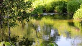 水流程在周围的水树的河反射的 影视素材