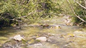 水流量在岩石河 流动的水在山河 影视素材