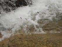 水流量在河 免版税库存图片