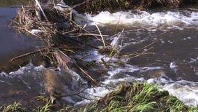 水流量通过形成从分支和垃圾的水坝 股票录像