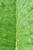 水滴叶子 库存图片