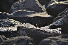 水滴在石头的 免版税库存照片