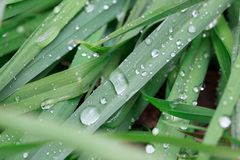 水滴在绿草说谎在夏天雨以后 秀丽本质上 免版税库存照片