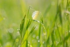 水滴在草的在雨以后 宏指令 图库摄影