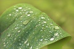 水滴在草的在雨以后 宏指令 免版税库存照片