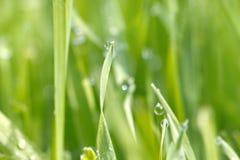 水滴在草的在雨以后 宏指令 库存图片