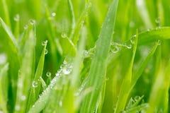 水滴在草的在雨以后 宏指令 免版税库存图片