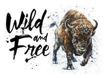 水牛城水彩野生生物绘画,北美野牛狂放和自由野生生物印刷品T恤杉的 免版税图库摄影
