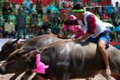 水牛chonburi种族 免版税库存照片