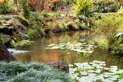水生小的池塘 图库摄影