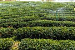 水生植物在庭院里 免版税库存图片