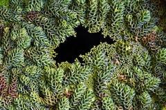 水生植物顶视图  免版税图库摄影