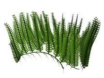 水生植物   皇族释放例证