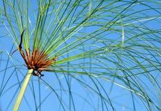 水生植物 免版税库存照片