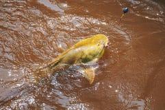 水的一位渔夫钩的鱼浮出水面 叫作J的鱼 免版税库存照片