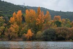 水的森林 免版税库存图片