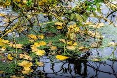 水的表面上的下落的叶子当秋天背景 图库摄影