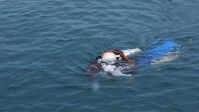 水的轻潜水员 股票视频