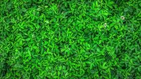 水盖的绿色植物叶子 向量例证