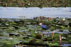 水禽活在公园 免版税图库摄影
