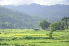 水稻与包围的小山的绿色域 库存图片