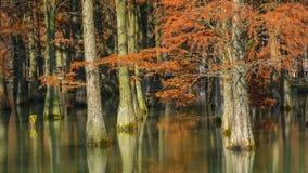 水红色森林 图库摄影
