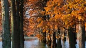 水红色森林 免版税库存图片