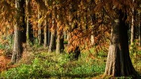 水红色森林 免版税库存照片
