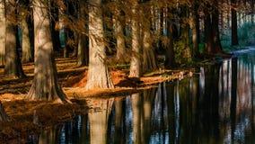 水红色森林 库存图片