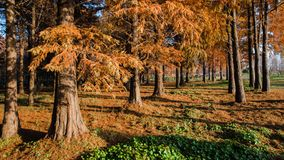 水红色森林 库存照片