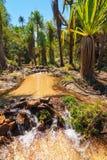 水绿洲 免版税图库摄影