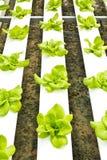 水耕的农场 免版税图库摄影