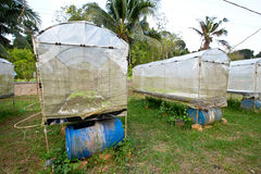 水耕的农场 免版税库存图片