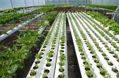 水耕的温室 免版税库存照片